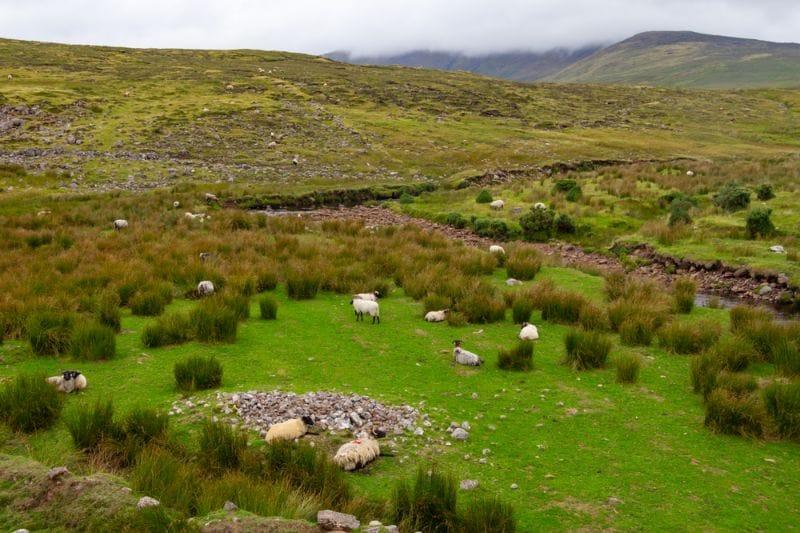 Die englischen Grünen Routen, die sogenannten Greenways, führen durch prächtige, typisch britische Landschaften.