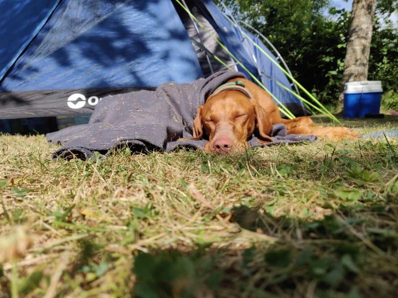 Auch der Hund war müde von der langen Fahrt und machte ein Nickerchen am Zelt ...