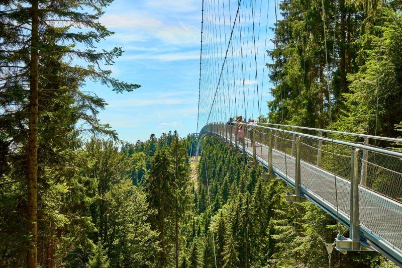 Wildline Hängebrücke im Nordschwarzwald