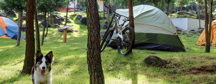 Gespecialiseerde campings